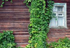 Window with ivy on it Stock Image