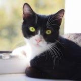 Window kitty Stock Photography