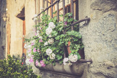 Window with large flowers Stock Photo