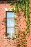 Window leaf wall with old brick background. Royalty Free Stock Photography