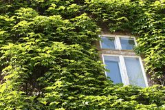 Window in leafs Royalty Free Stock Photography