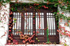 Window with leaves Royalty Free Stock Photo