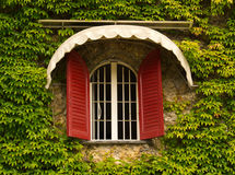 Window among leaves. An unusual colorful red and white window on a wall full of ivy Royalty Free Stock Photo