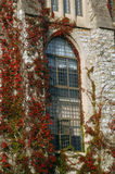 Window And Leaves. Vines climb up a wall and surround a window of a building at St. Olaf College in Northfield, MN. The image was taken in autumn when leaves Royalty Free Stock Photos