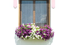 Window with lila and white flowers Stock Images