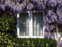 Window with lilac. A window surrounded by lilac and yellow flowers. Photo taken in Dunster, Devon (England Stock Images