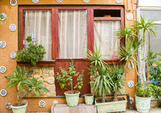 Window and many flower pots in old home Stock Image