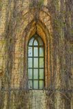 Window in an old brick building, covered with ivy. Shot made in reservation national park Askania Nova, Ukraine Stock Photography