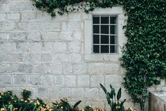 Window on an old gray stone wall with plant. Place for text Stock Photography
