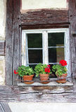 Window of an old half-timbered house, red gerania Royalty Free Stock Photo
