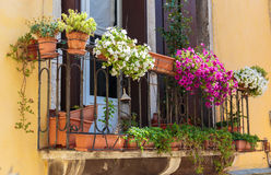 Window in old house decorated with flower pots and flowers Stock Photo