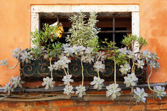 Window of an old house with plants(Houseleek ).  royalty free stock images