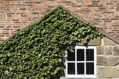 Window in an old house. Timber framed window in an old house with green ivy leaves growing over the exterior Stock Photo