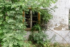 Window of an old uninhabited house. With a tree in the countryside Royalty Free Stock Photography