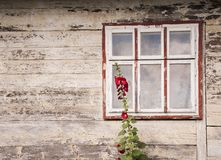 Window of an old wooden house with red malva flowers growing near it concept ethnostil royalty free stock photography