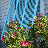 Window with oleander. Detail of exterior window on home with flowering bush Royalty Free Stock Image