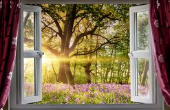 Window open onto bluebell forest sunrise Stock Photos