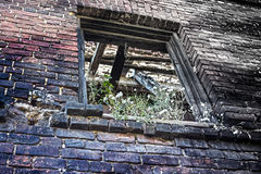 Window opening covered by vegetation in brick wall Royalty Free Stock Photos