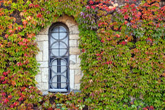 Window  with orange and green leaves Royalty Free Stock Photography