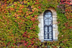Window  with orange and green leaves Royalty Free Stock Images