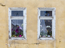 Window with orchid flower decoration inside Stock Image