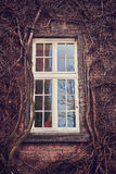 The window #4. The window at overgrown ivy Stock Photography