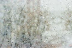 Window pane during a rain. Background from a streams and drops of water on window pane and blurred tree through the glass during a rain in early spring royalty free stock photo