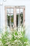 window pattern with grass flower Royalty Free Stock Photo