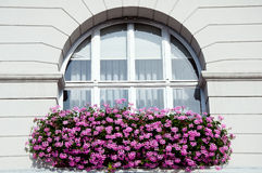 Window with pink geranium Royalty Free Stock Image