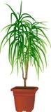 Window plant Stock Image