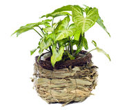 Window plant Stock Photos