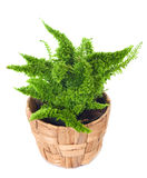 Window plant Stock Images