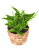Window plant Stock Images