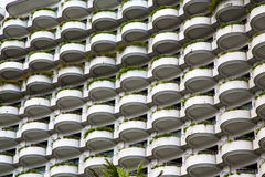 Window plant terrace of the centre  bangkok thailand Royalty Free Stock Photo