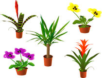 Window plants. Collection (rasterize from vector Royalty Free Stock Images