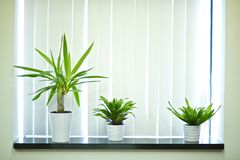 Window Plants Royalty Free Stock Image