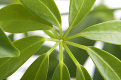 Window plants close up Stock Photography