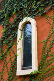 Window. Plants covered wall & window so beautiful Royalty Free Stock Images