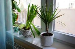 Window plants Royalty Free Stock Photos