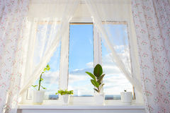 Window with plants. Schefflera , ficus , violet. Stock Image