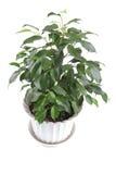 Window plants on white Royalty Free Stock Image