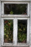 Window with potted flowers creates narrow-minded feminine touch. Dying Russian village. women's affairs Royalty Free Stock Photography