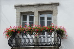 Window with railings and flowers Royalty Free Stock Image