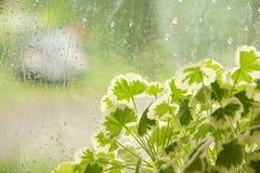 Window rain water drops glass flowers summer day. Emotions of summer freshness of rain stock photos