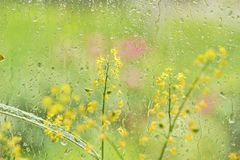Window rain water drops glass flowers summer day. Emotions of summer freshness of rain stock images