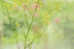 Window rain water drops glass flowers summer day. Emotions of summer freshness of rain stock image