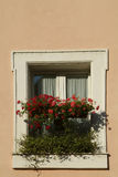 Window with red flowers. In Rome, Italy Stock Photos