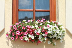 Window with red and white flowers Stock Photo