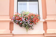 Window with red and white flowers Royalty Free Stock Photo
