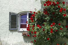 Window and roses Royalty Free Stock Images